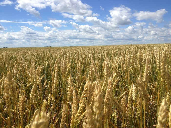 2015-blog-dean-harder-wheat-field