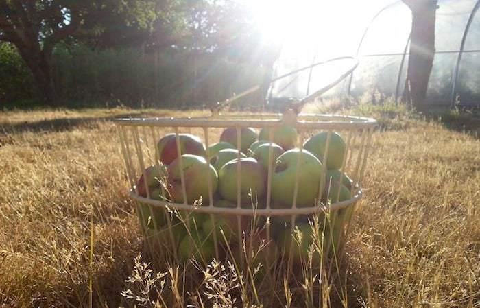 2015-10-blog-non-browning-apple-thumb