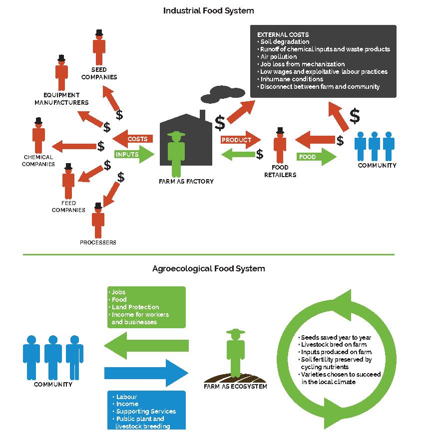 Diagramme d'agroécologie